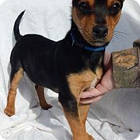 Adopt A Pet :: Cheech (7 lb) - Sussex, NJ