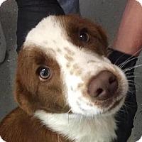 Adopt A Pet :: TRAMP - Pine Grove, PA