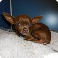 Adopt A Pet :: Jake - Mesa, AZ