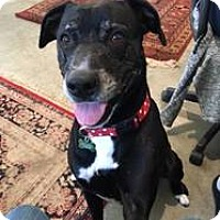 Adopt A Pet :: Deli - Petaluma, CA