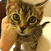 Adopt A Pet :: Alfie - Herndon, VA