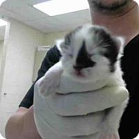 Adopt A Pet :: A276186 - Conroe, TX
