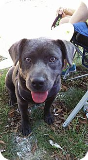 Pit Bull Terrier Mix Dog for adoption in Durham, North Carolina - Sally