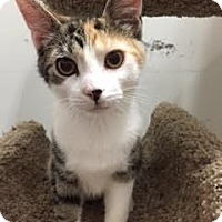 Adopt A Pet :: Smidgeon - Lancaster, PA