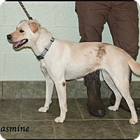 Adopt A Pet :: Jasmine - Ada, OK
