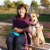 Adopt A Pet :: Sarita - Elyria, OH
