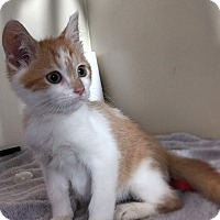 Adopt A Pet :: Zach - Gahanna, OH