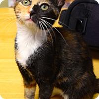 Adopt A Pet :: Sabrina - Island Park, NY