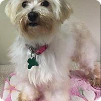 Adopt A Pet :: Gabby - La Verne, CA