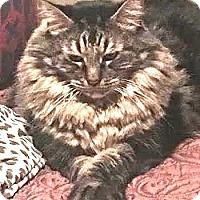 Adopt A Pet :: Sir Robbie, the Magnificent - Davis, CA