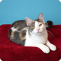 Adopt A Pet :: Riesling - Columbia, IL