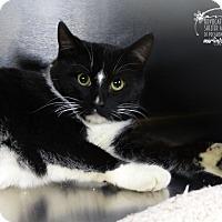 Adopt A Pet :: Raymond - Marlinton, WV