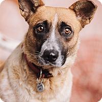 Adopt A Pet :: Cassie - Portland, OR