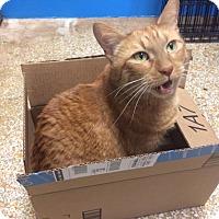 Adopt A Pet :: Hotch - Chicago, IL