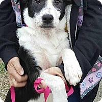 Adopt A Pet :: Mellie - Sugar Grove, IL