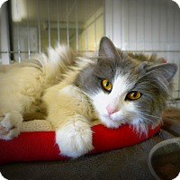 Adopt A Pet :: Smokey Hill - Casa Grande, AZ