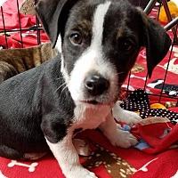 Adopt A Pet :: MASON - Canton, GA