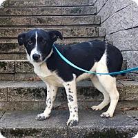 Adopt A Pet :: John is in Rhode Island! - Brattleboro, VT