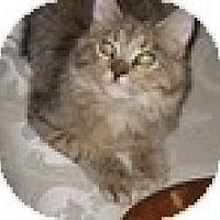 Adopt A Pet :: Khloe - Vancouver, BC