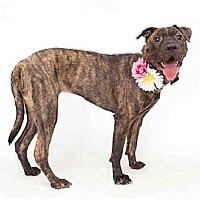 Adopt A Pet :: Indy - Orlando, FL