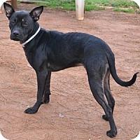 Adopt A Pet :: Aggie - Athens, GA