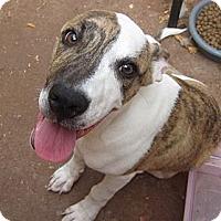Adopt A Pet :: Bubs - Nuevo, CA