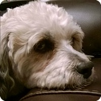 Adopt A Pet :: NICHOLAS - Fort Worth, TX