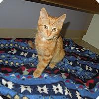 Adopt A Pet :: Barney - Medina, OH