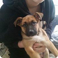 Adopt A Pet :: Biscuit - Burlington, NJ