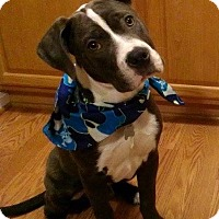 Adopt A Pet :: Remey - Winchester, VA