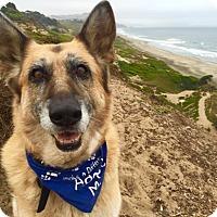 Adopt A Pet :: Boggs - San Francisco, CA