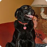 Adopt A Pet :: Zelda - Huntsville, AL