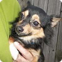 Adopt A Pet :: Diego - Memphis, TN