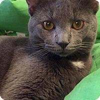 Adopt A Pet :: Mr. Wonderful - Arlington, VA