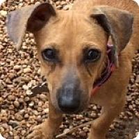 Adopt A Pet :: Rue DeNoel - Houston, TX