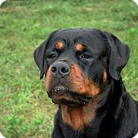 Adopt A Pet :: Gila - Seffner, FL