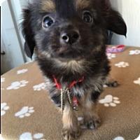 Adopt A Pet :: JYMM - Elk Grove, CA