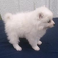 Adopt A Pet :: vnbgfhj - HARRISBURG, PA