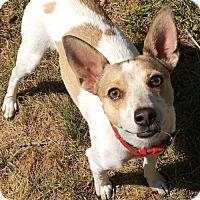 Adopt A Pet :: Sampson *DOG/CAT FRIENDLY* MICROCHIPPED - Clarkston, MI