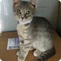 Adopt A Pet :: BETTY - Powellsville, NC