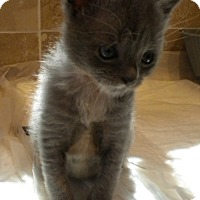 Adopt A Pet :: Buddy - Stafford, VA