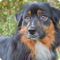 Adopt A Pet :: SAGE - Pittsburgh, PA