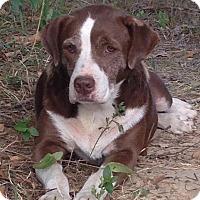 Adopt A Pet :: Deloris - Mount Holly, NJ