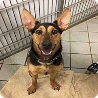 Adopt A Pet :: BELLA - Canfield, OH