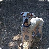 Adopt A Pet :: Elliot - Austin, TX