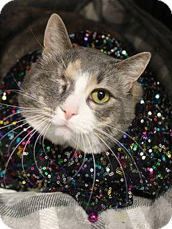 Calico Cat for adoption in Boise, Idaho - Whiskey