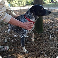 Australian Cattle Dog Dog for adoption in Ruston, Louisiana - Molly
