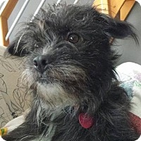Terrier (Unknown Type, Small) Mix Dog for adoption in Kansas City, Missouri - Murphy