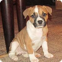 Adopt A Pet :: Jasper - Grand Rapids, MI