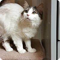 Adopt A Pet :: Catalina - Alpharetta, GA